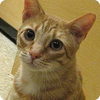 Adopt A Pet :: Dorito - Tulsa, OK