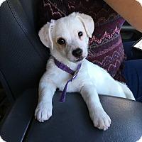 Adopt A Pet :: Rufus - El Cerrito, CA