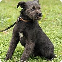 Adopt A Pet :: Benji - Hagerstown, MD