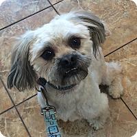 Adopt A Pet :: Voyager - Oak Ridge, NJ