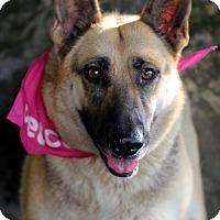 Adopt A Pet :: Enya - Dalton, GA