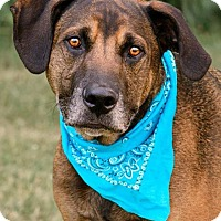 Adopt A Pet :: Regis - In Foster Home - Zanesville, OH