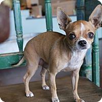 Adopt A Pet :: Moosey - San Antonio, TX