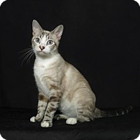 Adopt A Pet :: Ferrah - Lufkin, TX