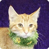 Adopt A Pet :: Louie - Jackson, MI