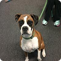 Adopt A Pet :: Loki - Reno, NV