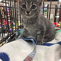 Adopt A Pet :: Dante - Toms River, NJ