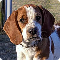 Adopt A Pet :: Ben - Fairfax, VA