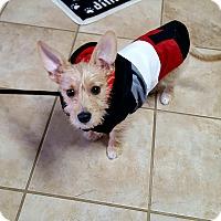 Adopt A Pet :: Samson - Homewood, AL