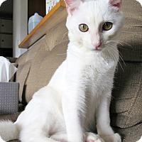 Adopt A Pet :: Vanilla the Very Best - Brooklyn, NY