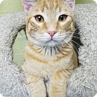 Adopt A Pet :: Ivan - Edwards AFB, CA
