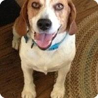 Adopt A Pet :: Clancy - Canoga Park, CA
