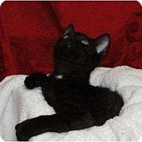 Adopt A Pet :: Lou - Orlando, FL