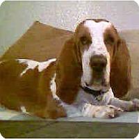Adopt A Pet :: Tonka - Phoenix, AZ