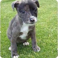 Adopt A Pet :: Raven - Bakersfield, CA