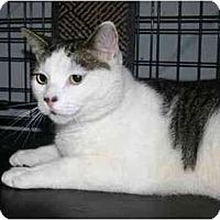 Adopt A Pet :: Twix - Lake Ronkonkoma, NY