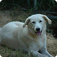 Adopt A Pet :: Ceara - New Boston, NH