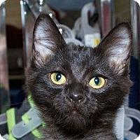Adopt A Pet :: Blane M - Sacramento, CA
