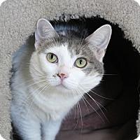 Adopt A Pet :: Johnnie G - Chicago, IL