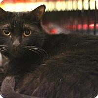 Adopt A Pet :: Mochi - Sacramento, CA