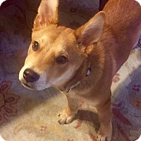 Adopt A Pet :: BANJO - EDEN PRAIRIE, MN