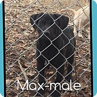 Adopt A Pet :: Max (Pom) - Windham, NH