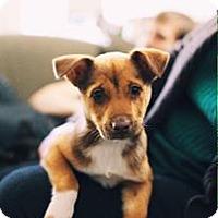 Adopt A Pet :: Nicki - Gainesville, FL