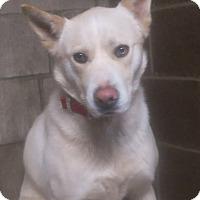 Adopt A Pet :: Odin - Clear Lake, IA