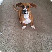 Adopt A Pet :: Eli - New Oxford, PA