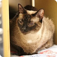 Adopt A Pet :: Sagwa - Dallas, TX