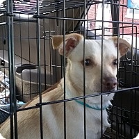 Adopt A Pet :: Archer - Red Lion, PA