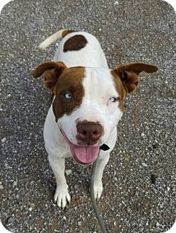 Pit Bull Terrier Mix Dog for adoption in Elgin, Oklahoma - Skye
