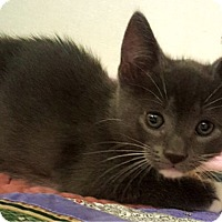 Adopt A Pet :: Simon - Key Largo, FL