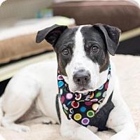 Adopt A Pet :: Max - Frisco, TX