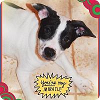 Adopt A Pet :: ADDIE - Chandler, AZ