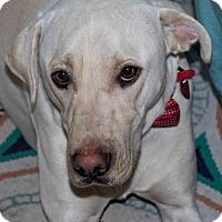 Adopt A Pet :: JAX - Clovis, CA