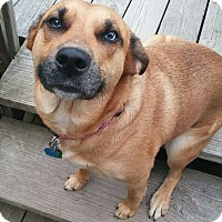 Adopt A Pet :: Karma - Painesville, OH