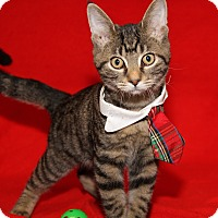 Adopt A Pet :: Quincy (Neutered) - Marietta, OH