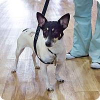 Adopt A Pet :: Evan Rachel Wood - Jersey City, NJ