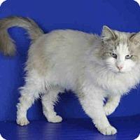 Adopt A Pet :: A027016 - Norman, OK