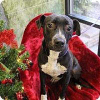 Adopt A Pet :: Dana - Greensboro, NC