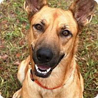 Adopt A Pet :: Donna Ann - Ormond Beach, FL