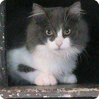 Adopt A Pet :: Victor - Maynardville, TN