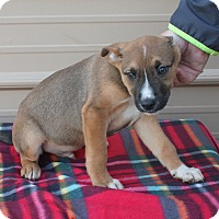 Adopt A Pet :: Jacks - Mayflower, AR