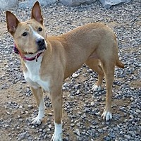 Adopt A Pet :: Roo - Las Cruces, NM