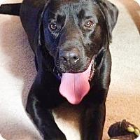 Adopt A Pet :: STRYDER - Toronto, ON