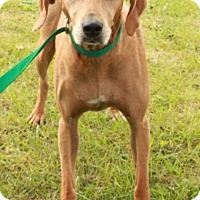 Adopt A Pet :: Misha - Hagerstown, MD