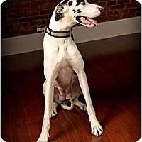 Adopt A Pet :: Ellie Mae - Owensboro, KY