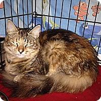 Adopt A Pet :: Bonita - East Hanover, NJ