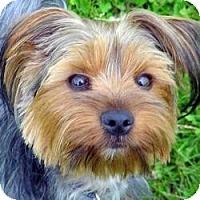 Adopt A Pet :: Bailey - Redding, CA